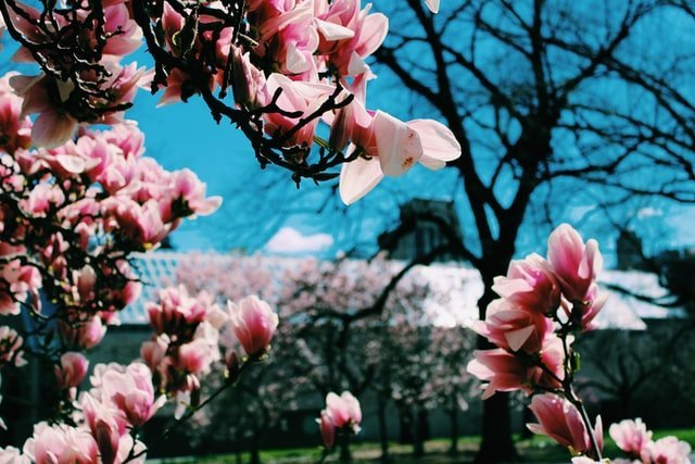 Top Activities to Do Outside This Spring